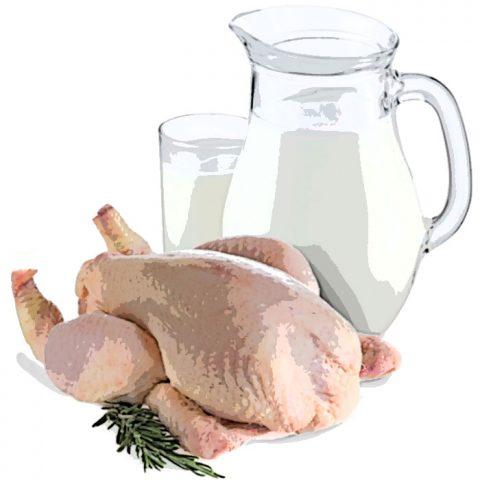 ingerir frango com leite