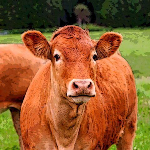 significado da vaca vermelha na Torá